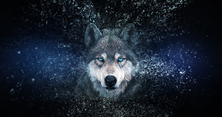 Wolf,Wallpaper,With,Decay,Effect,